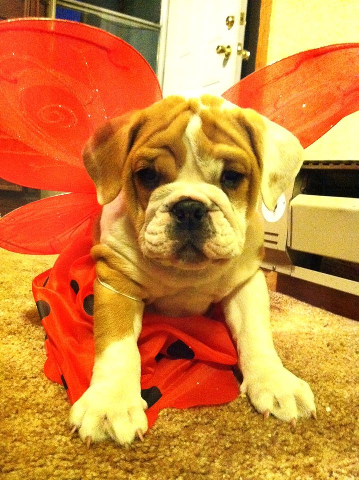 Friday Favorites: Throwback Dog Costumes