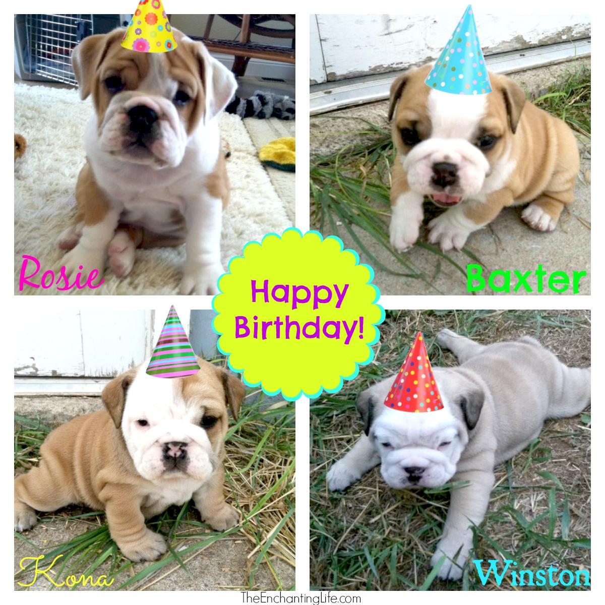 happy birthday bulldogs the enchanting life